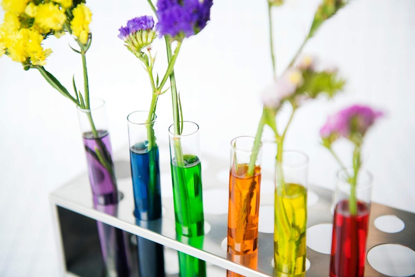 rośliny w kosmetyce